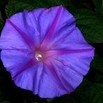 Flor de luz y color II