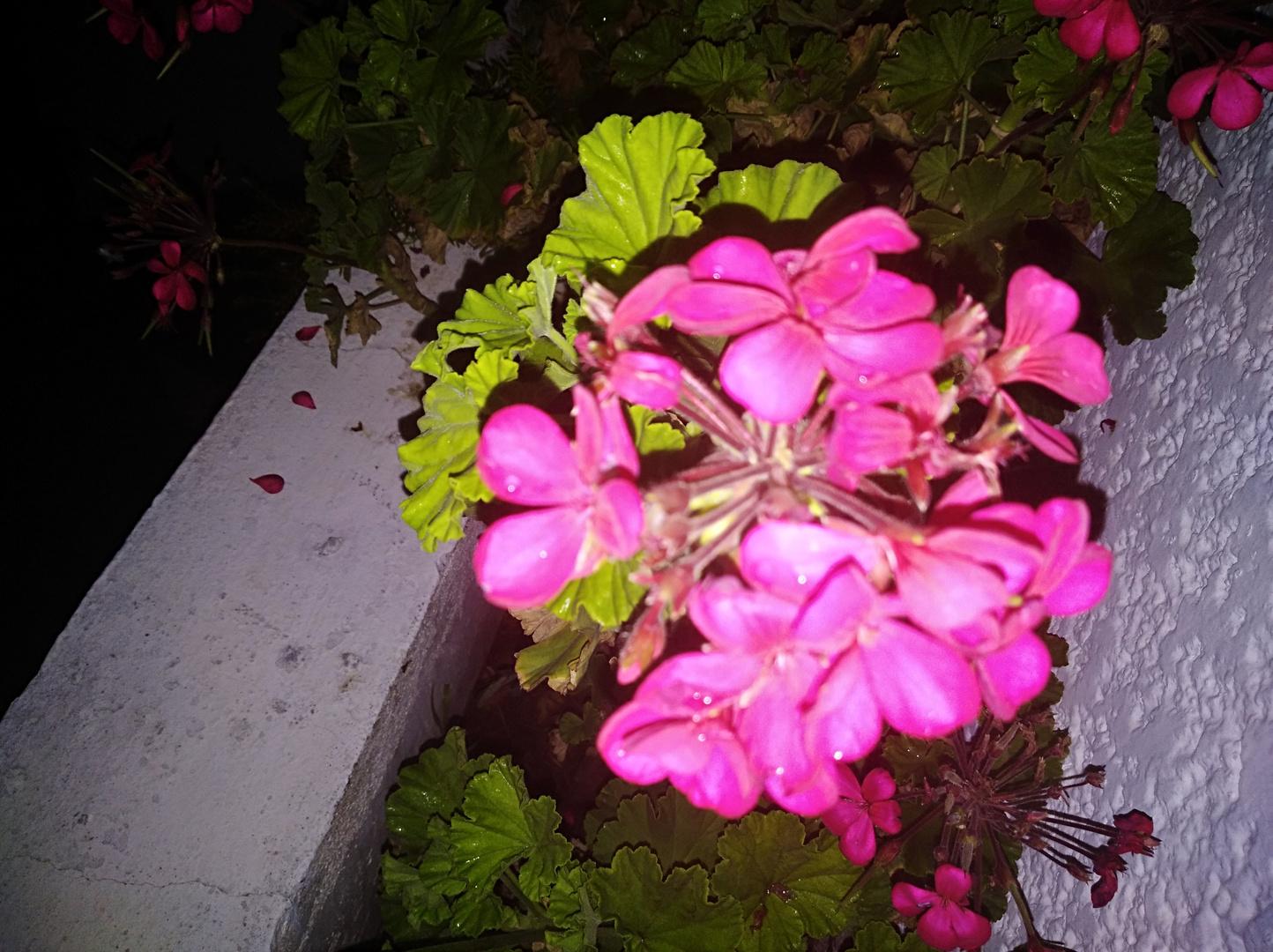 Flor De Noche I