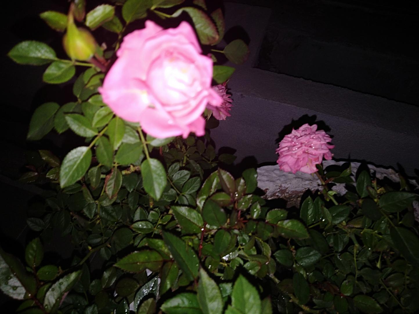 Flor De Noche III