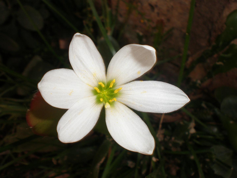 Flor de otoño