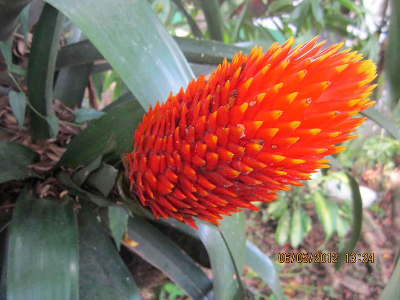 flor del tropico