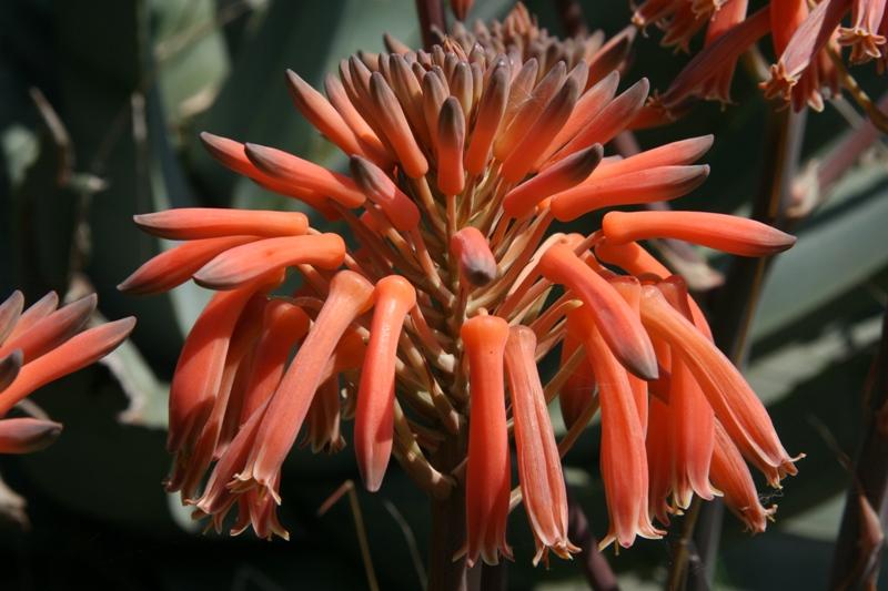flor deslumbrante!