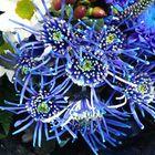 Flor en Azul