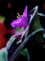 Flor en Fantasía
