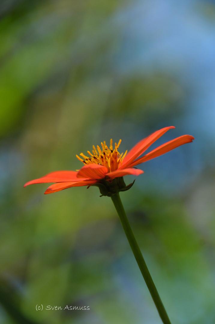 Flor en los bosques de Monteverde-Costa Rica