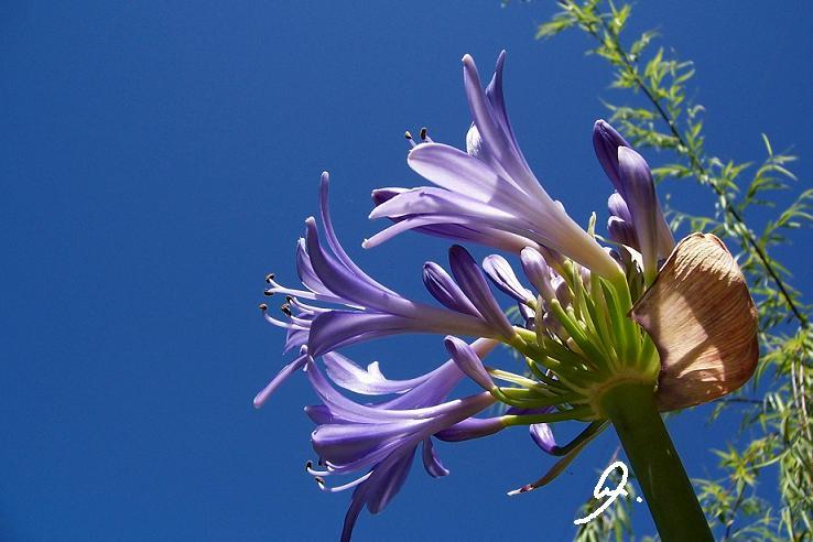 Flor en pleno sol
