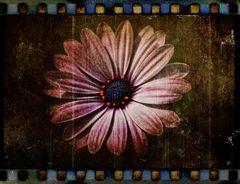 Flor envejecida
