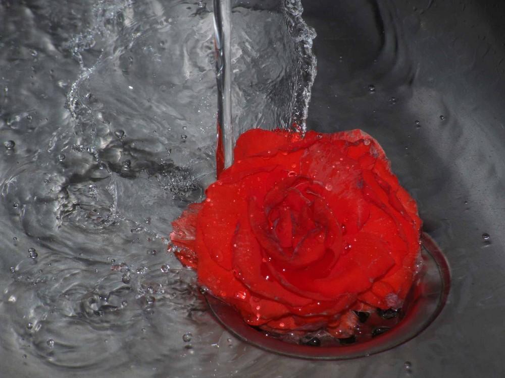 Flor Roja y Agua
