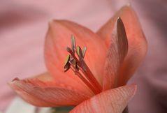 Flor salmon