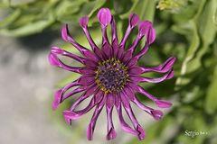 Flor sin nombre