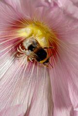 Flor y abejorro