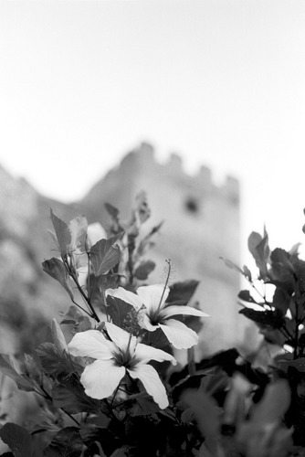 flor y torre