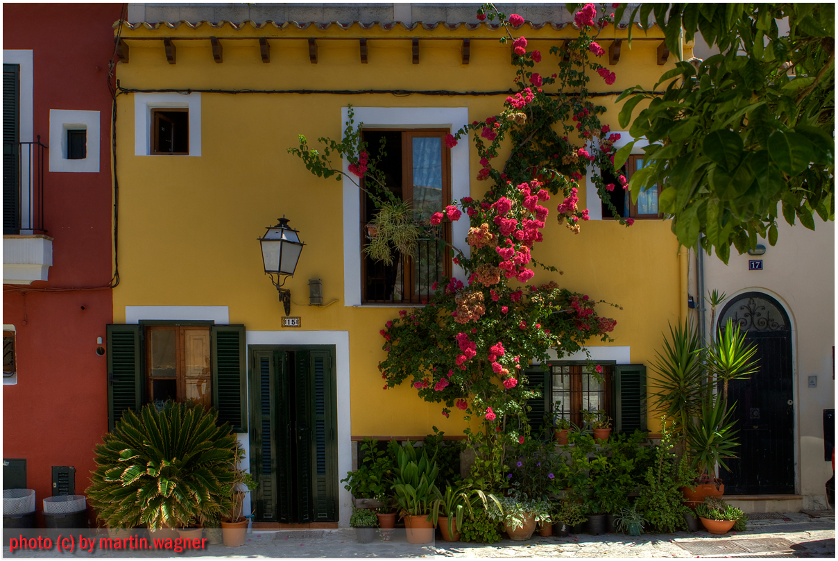 Flora auf Mallorca