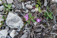 flora der Arktis