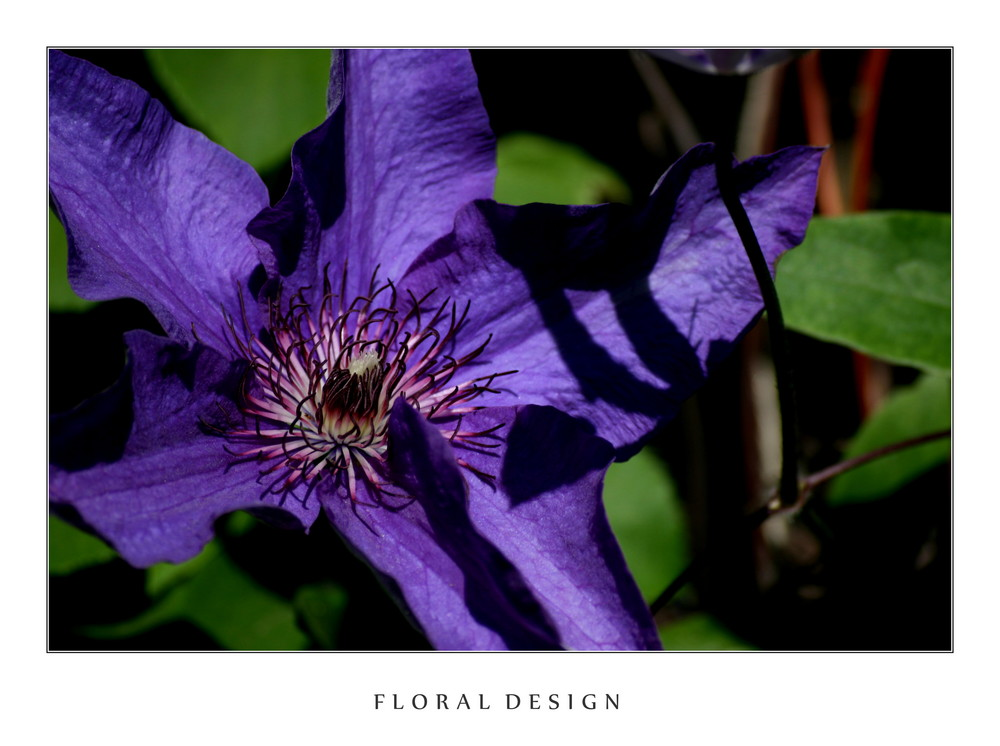 Flora Design III