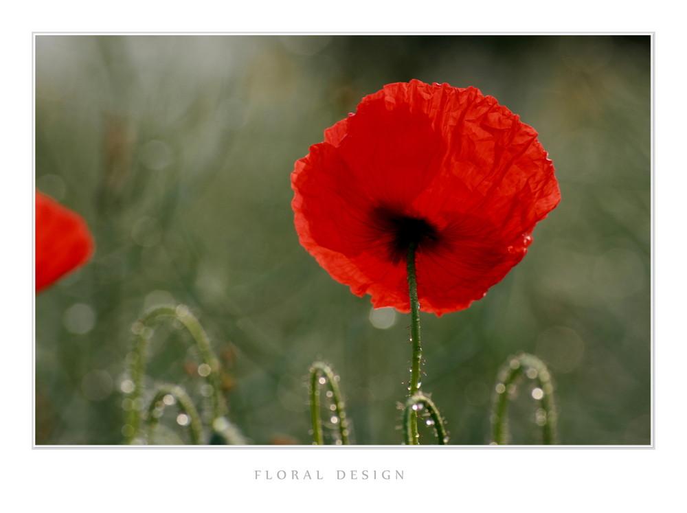 Flora Design IV