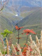 Flora im Kaukasus............