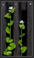 Flora kann auch parallel,...