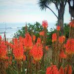 Flora Neuseelands