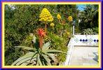 Flora Nordafrika Tunesien
