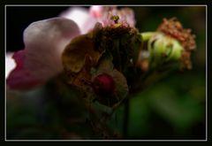 Flora und Fauna...