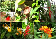 Flora und Fauna im Burger's Zoo in Arnheim