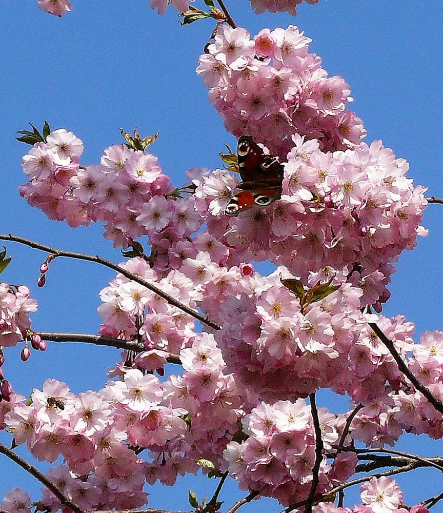Flora und Fauna im Frühling