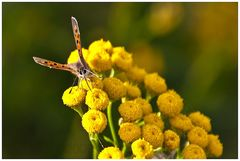 Flora und Fauna im Teufelsmoor, oder ...