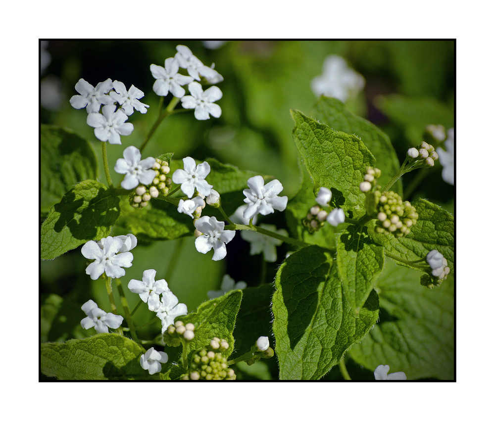 Flora V