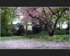 Florablüten
