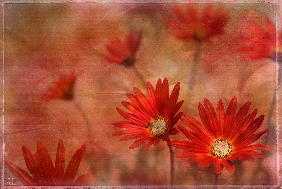 floraisons XVII