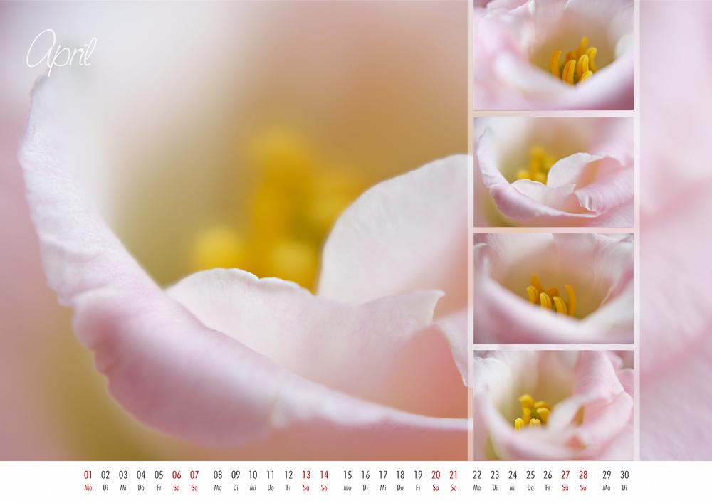 floral colors 2013 - 04