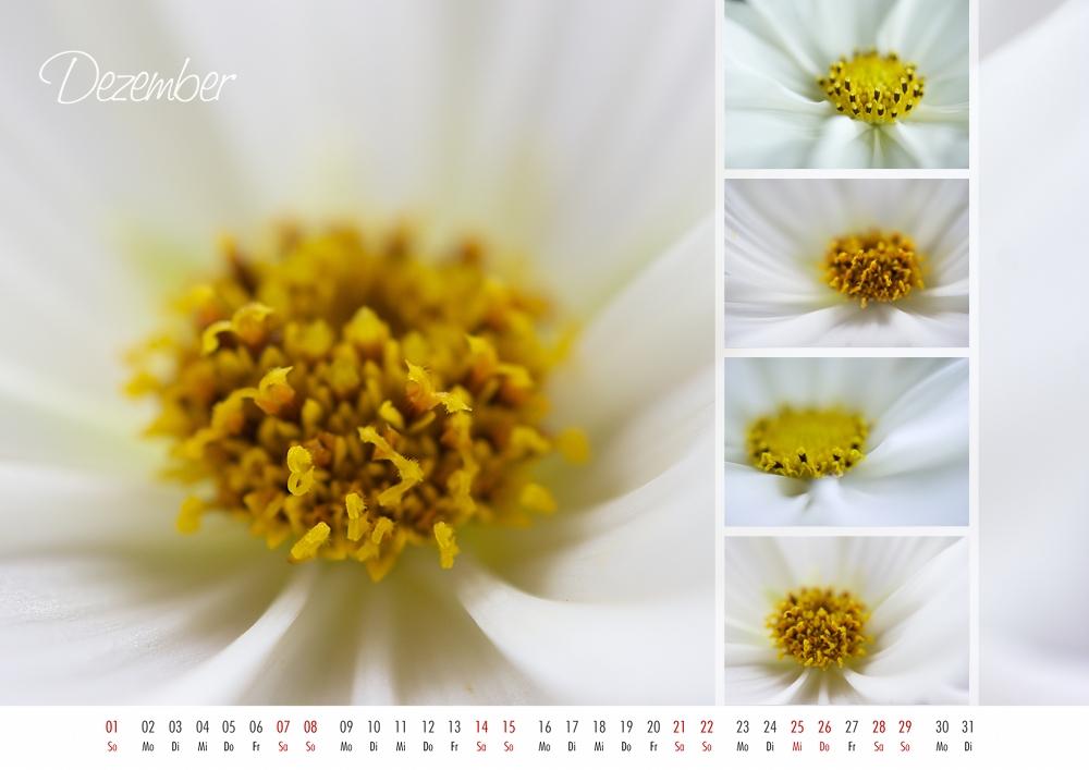 floral colors 2013 - 12