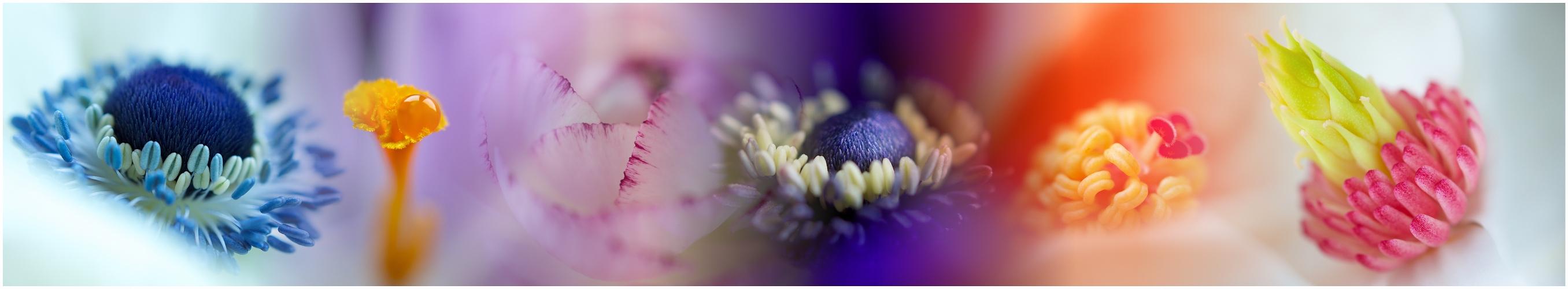 floral ... ... colors