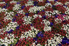 floral geteppicht