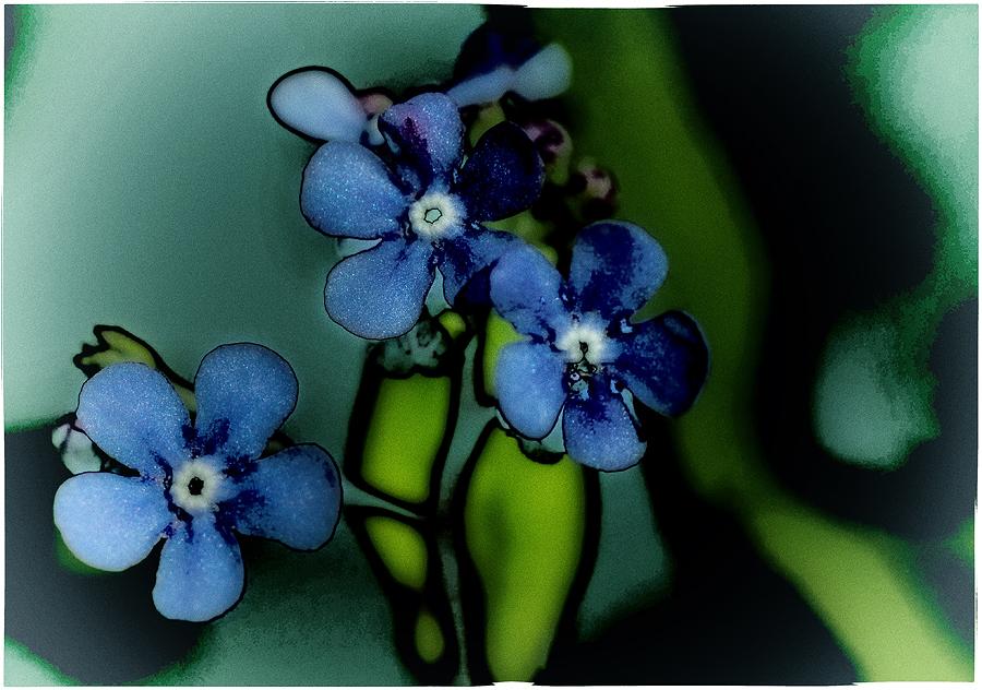 Florale Impression