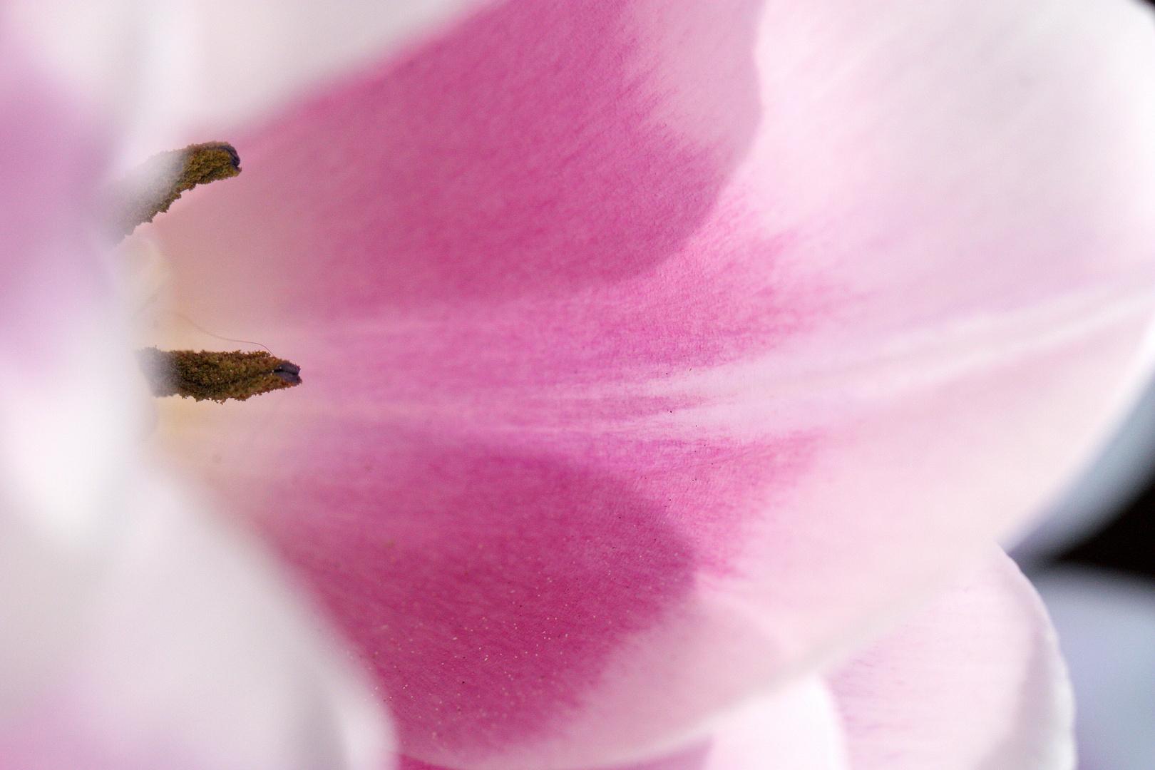 florales 2