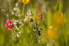 Florales aus den Alpen