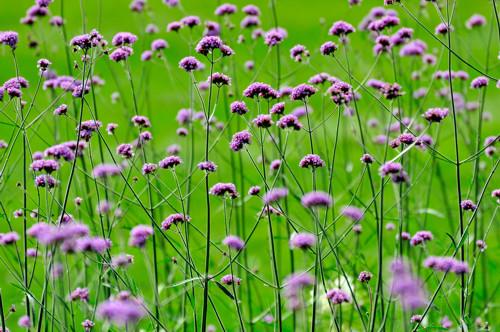 Florales Stillleben III