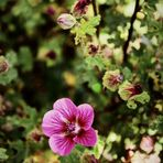 Floral'Ys