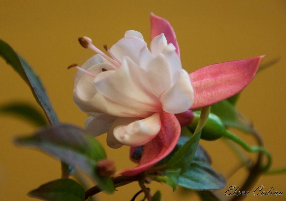 Florece para no marchitarse