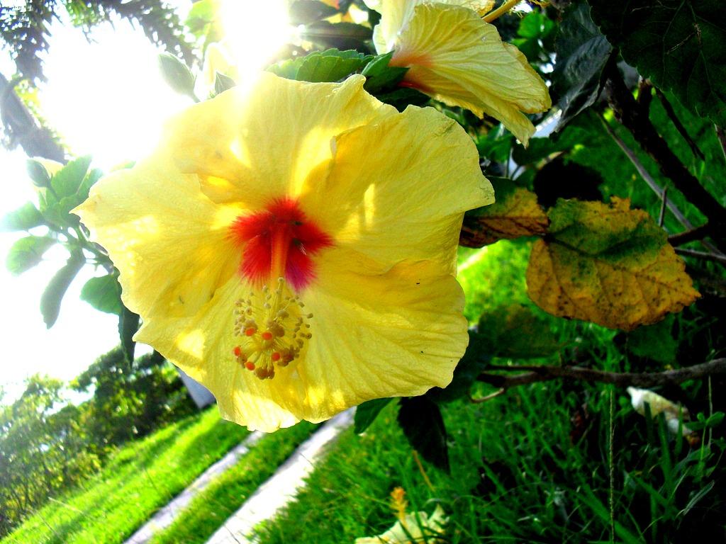 Florecer el sentir de un nuevo vivir