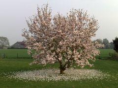 florecer y desflorecer