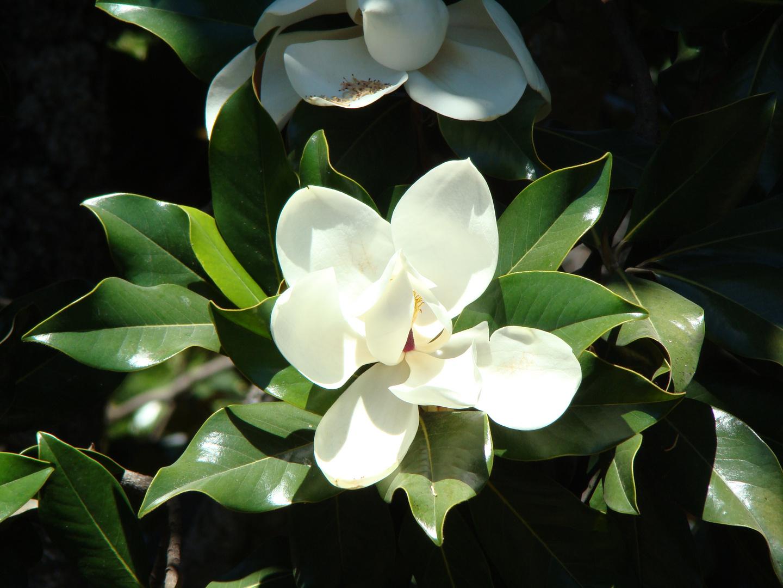 Floreciente Granada