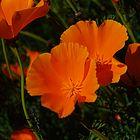 Florecilla Andina