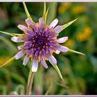 Florecilla de campo