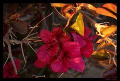 - Florecillas -