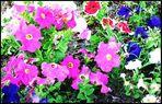 florecillas --