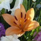 Flores (16)