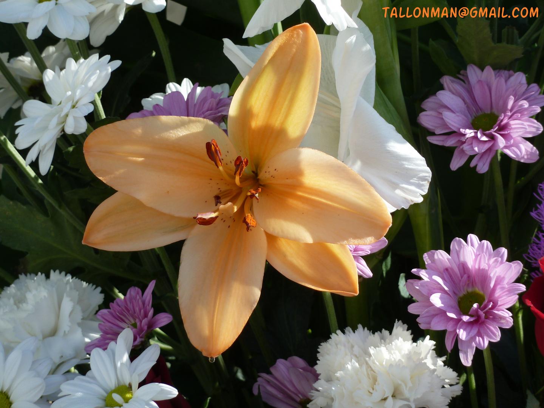 Flores (18)